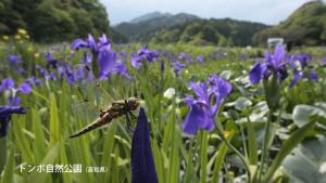 トンボ自然公園(高知県)