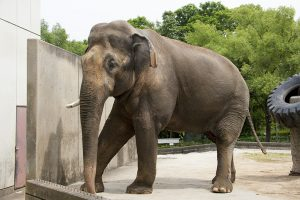 親子で人気の象一家
