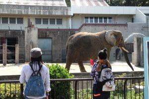 水遊びやもぐもぐタイムの象の親子が見える