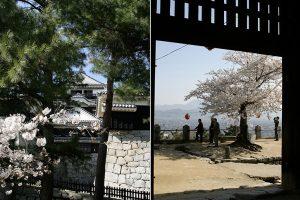 隠門から見た桜の名所
