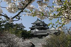 松山城に登ってみる