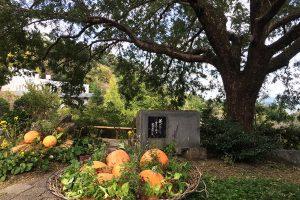 園内では、収穫とハロウィンなど、様々なイベントを自然と一体で演出してくれる