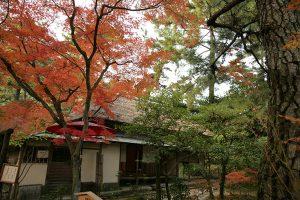 明治初期に建てられた石州流の茶室、日暮亭と紅葉。