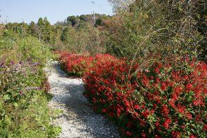 赤や黄色の草花がきれい。