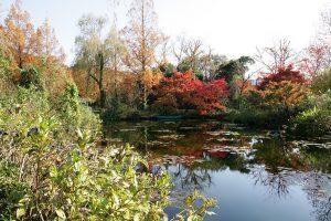 紅葉の「水の庭」絵画のような美しさ。