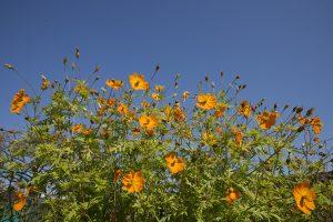 色鮮やかな花もきれい。