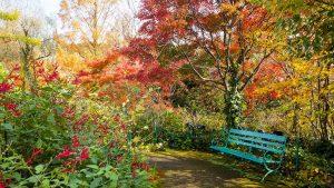 秋、モネの庭「水の庭」の紅葉