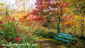 高知県、北川村 マルモッタン モネの庭