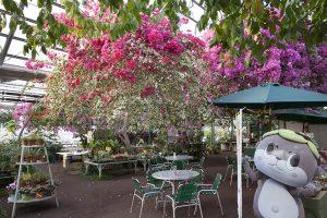 ハウス内には美しいブーゲンビリアが咲き誇る