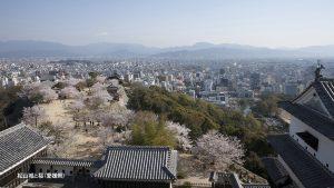 愛媛県松山城と桜