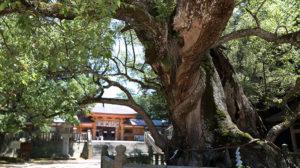 樹齢3000年を超える大楠のある大山祇神社