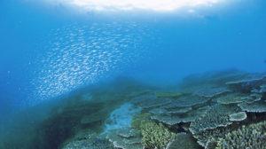 西海観光船で見る美しいサンゴ群