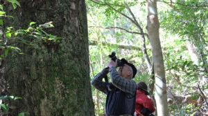 巨木めぐりツアー