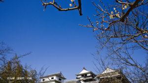 松山城の梅