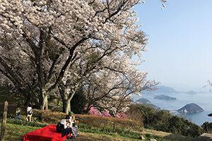 桜の名所紫雲山と瀬戸内